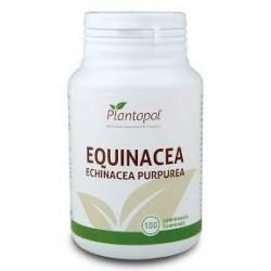 Equinacea (Echinacea Purpurea) Plantapol 100 comprimits
