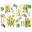 PLANTES MEDICINALS